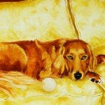 judith jarcho - jessie golden retriever450x450
