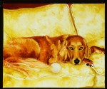 judith jarcho - jessie golden retriever350x225